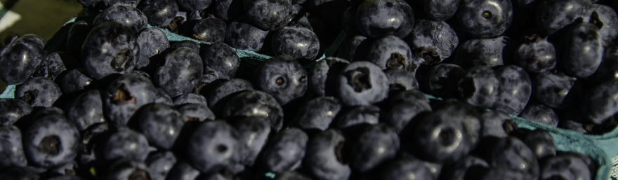 Blueberries PIX3165