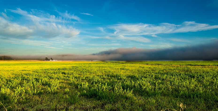 A dark fog bank rolls in over the sunny farmland of Ebey's Reserve.