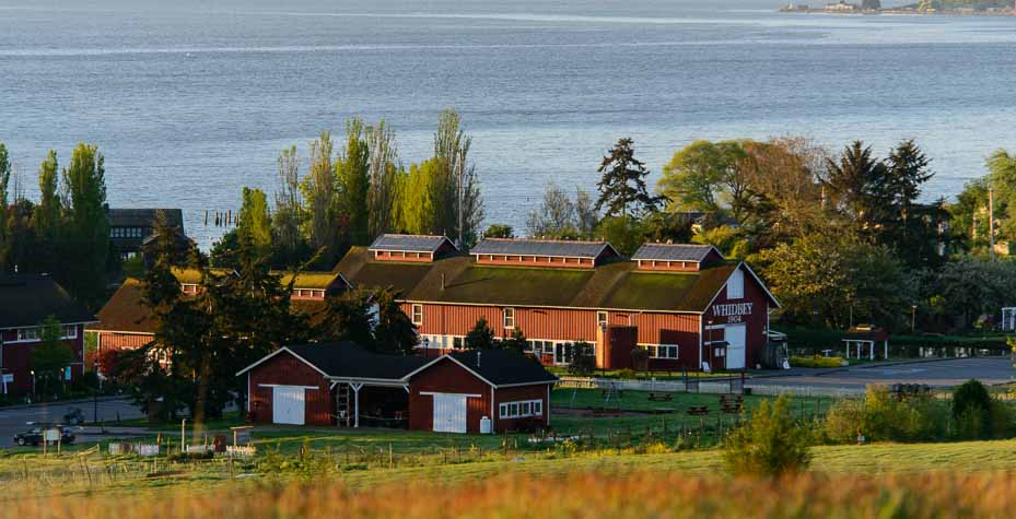 A large red barn at Greenbank Farm with the words Whidbey and 1904 on it.