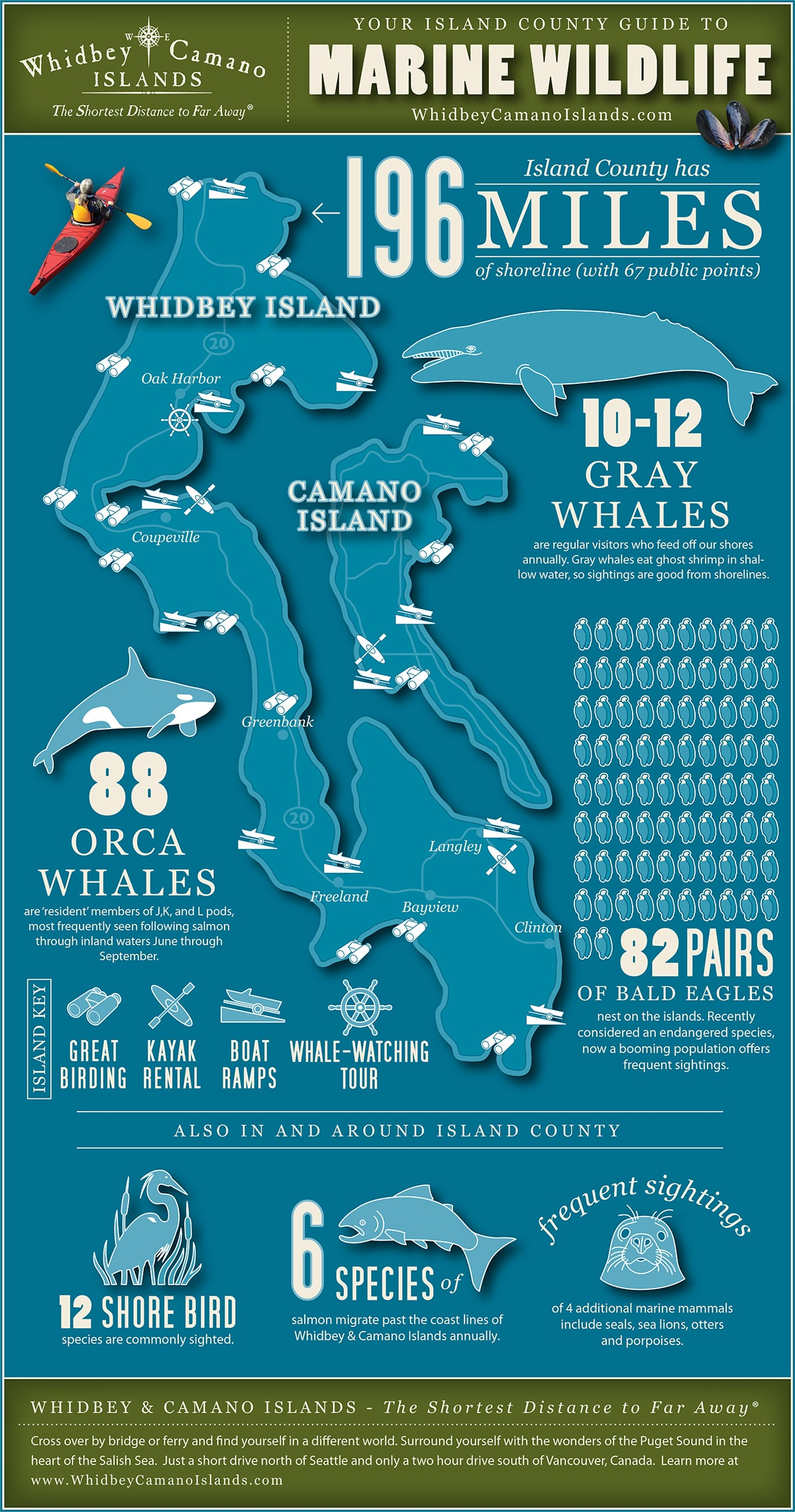 Marine Wildlife Infographic Whidbey And Camano Islands