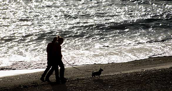 Couple walking their dog on a beach