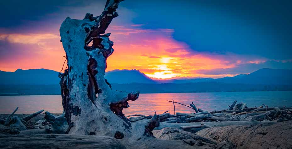 A multi-colored sunrise is framed by driftwood.