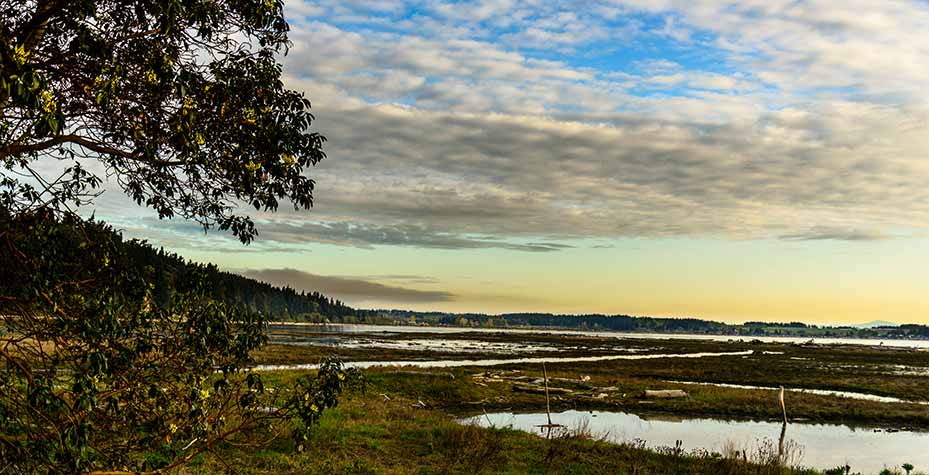 Early morning at Livingston Bay, a haven for wildlife.