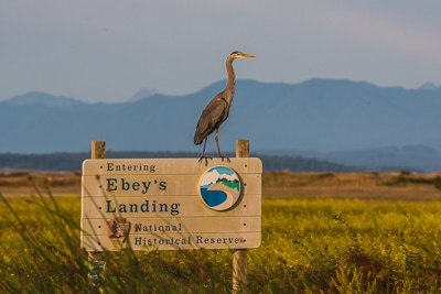 "A heron sits on a sign that says, ""Entering Ebey's Reserve."""