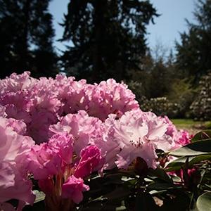 Peak Bloom Season at Meerkerk Gardens