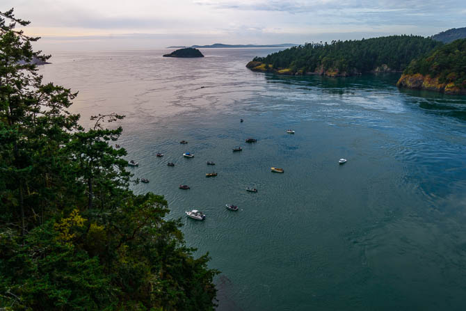 A dozen or more fishing boats are in Deception Pass. The view is from on top of the bridge looking west.