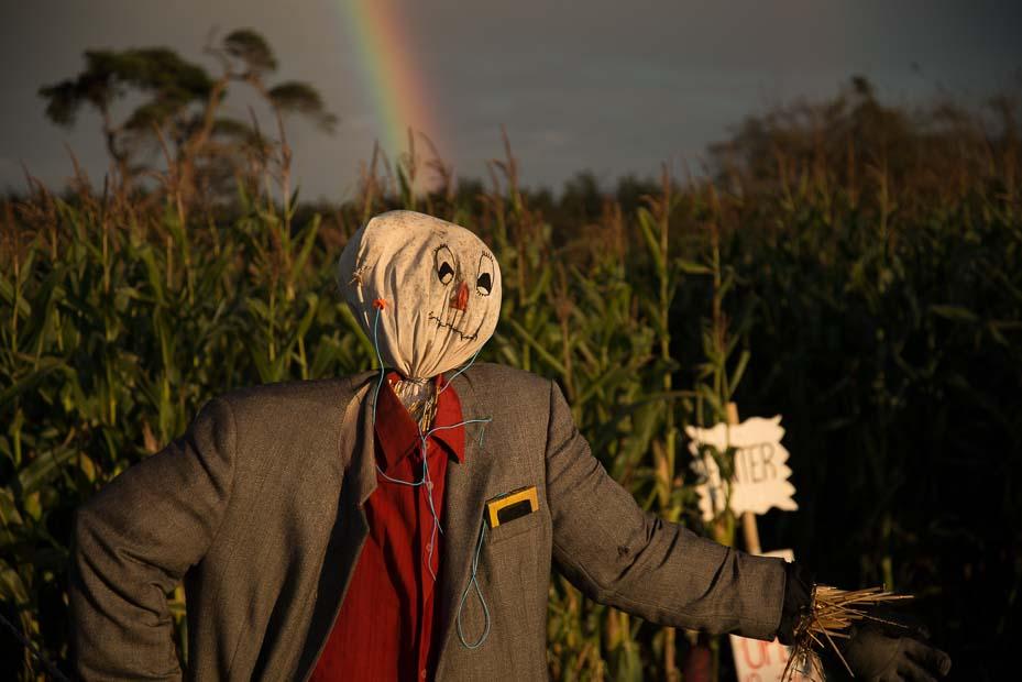 Scarecrow_PIX5120