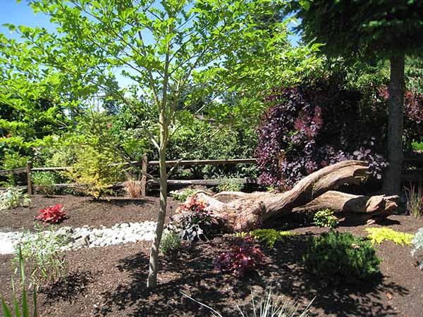 camano island backyard wildlife habitat garden tour june 24