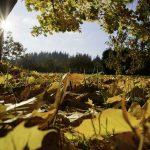 Fall Escapes