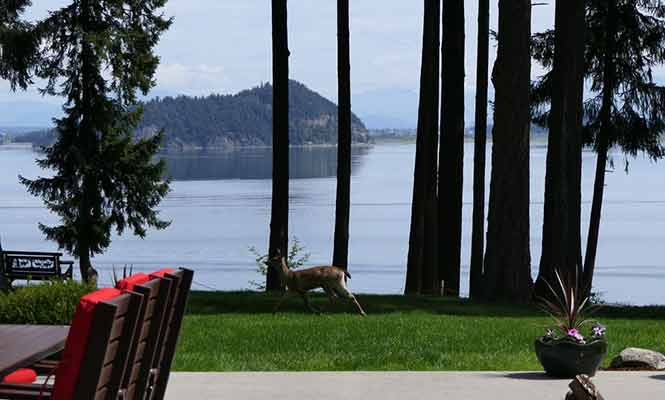 Soaring-Eagle-Lodge-Deck-Deer-and-View