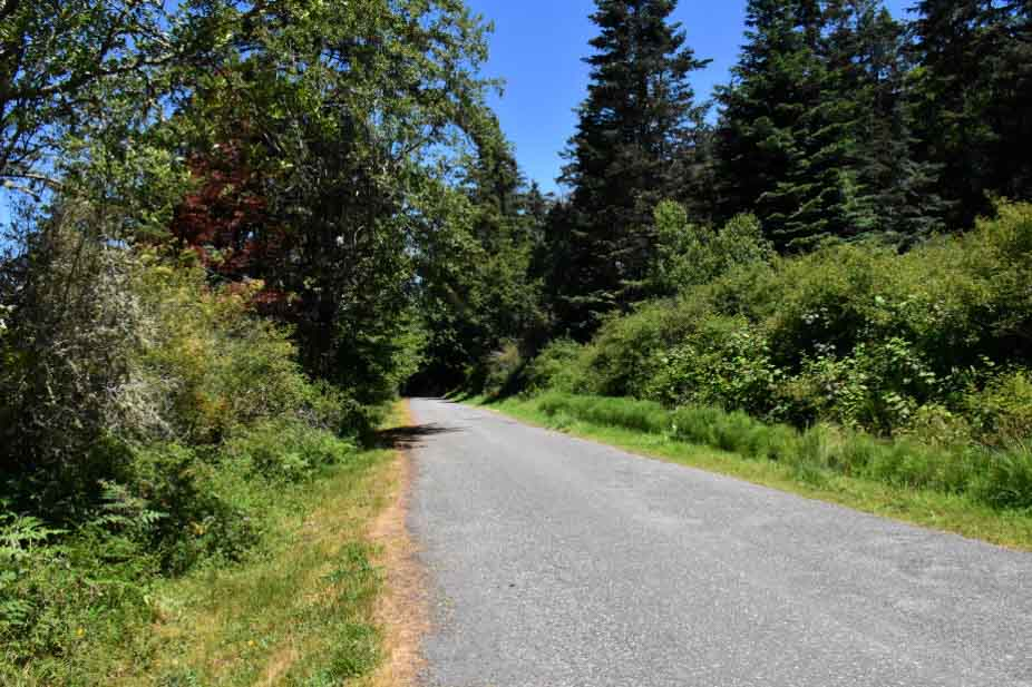 Paved trail with trees and bushes on either side