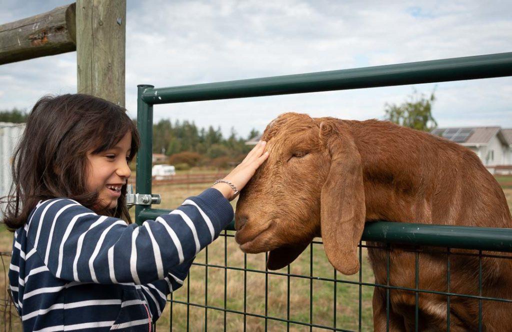 Kid pets a goat