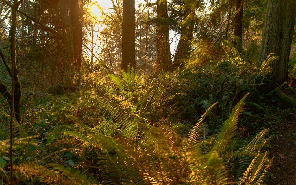 South-Whidbey-State-Park_6083