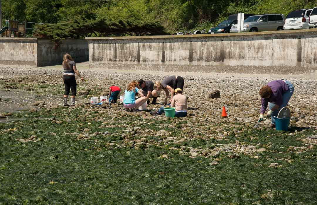 Family digs for clams at Double Bluff Beach