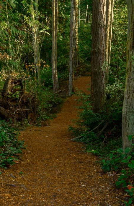 Cedar leaves carpet a hiking trail at Deception Pass State Park