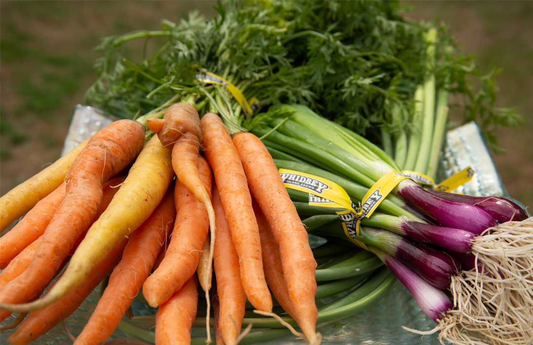 Fresh carrots and green onions on a plate.