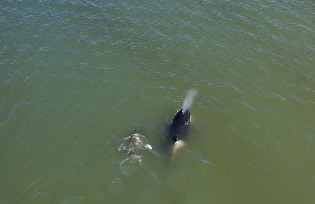 Aerial of Orca shot from a Drone