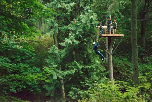 Canopy Tours Northwest 3811 536x358