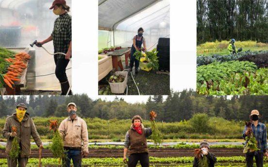 Organic Farm School 552x345