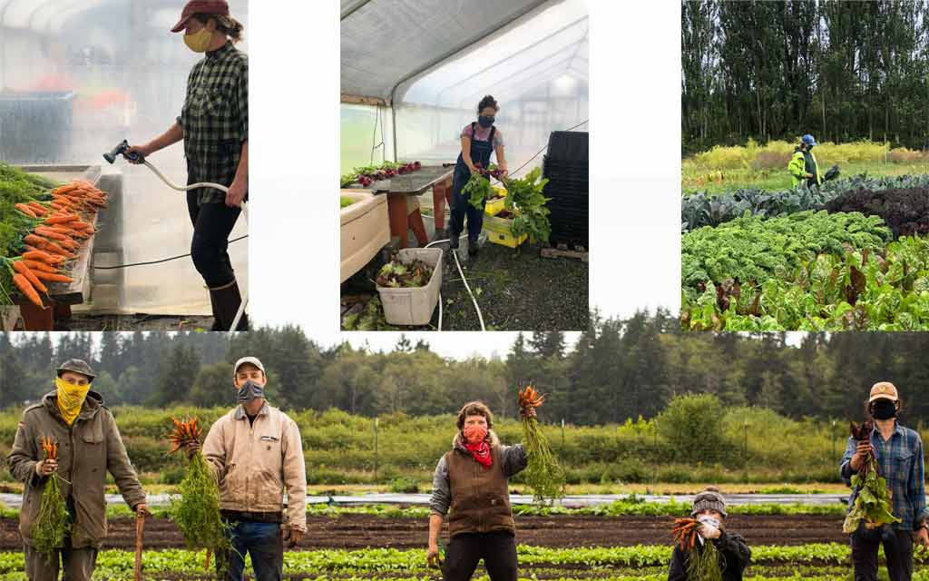 https://whidbeycamanoislands.com/activities/organic-farm-school/