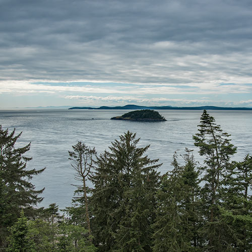 The waters of Deception Pass seen from 200 feet up a tree